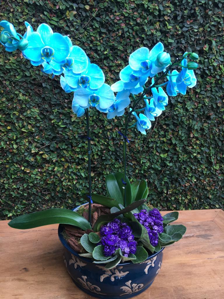 flor azul 8
