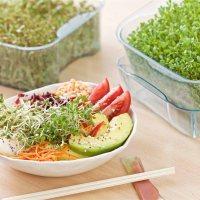 Kit de germinação permite que o consumidor faça seu próprio alimento