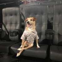 4ª Edição do Cine Pets terá exibição do filme Vai Que Cola 2 - O Começo