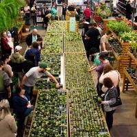 Festival de Suculentas terá mais de 7 mil plantas com preços a partir de R$ 3,90