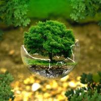 Curso internacional online e gratuito vai discutir os Objetivos de Desenvolvimento Sustentável da ONU