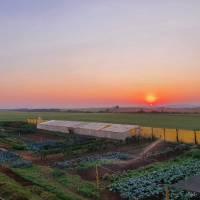 ACBH Do campo à mesa: Agricultores se reinventam e encontram novas formas de chegar ao consumidor durante pandemia